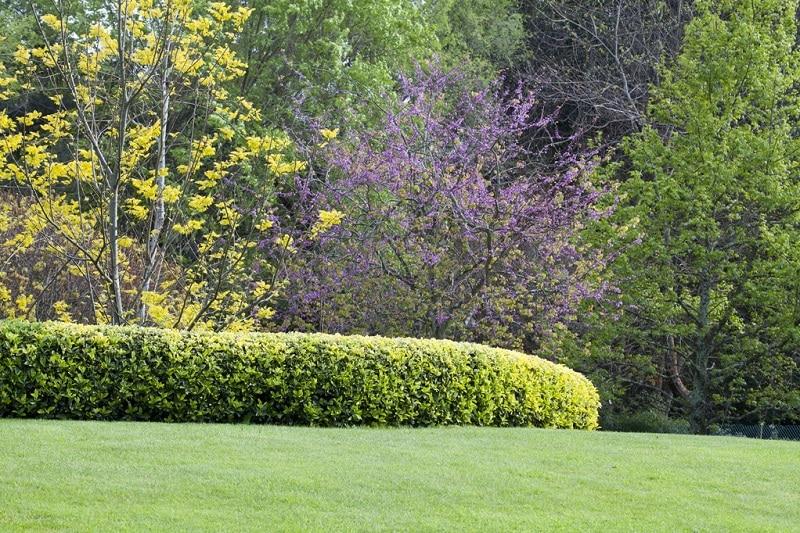 Quels arbustes choisir pour son jardin au printemps